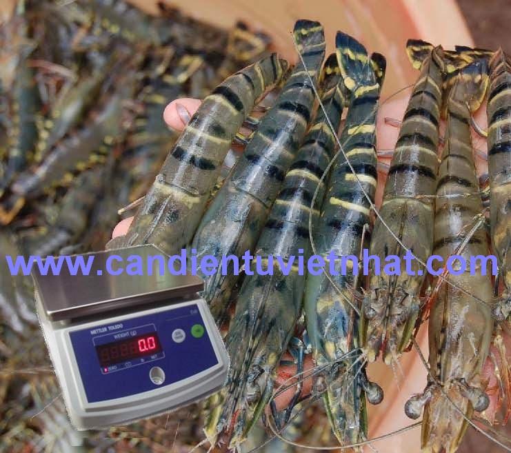Cân thủy sản CUB, Can thuy san CUB, can-thuy-san-cub-che-bien-thuy-san_1373688790.jpg
